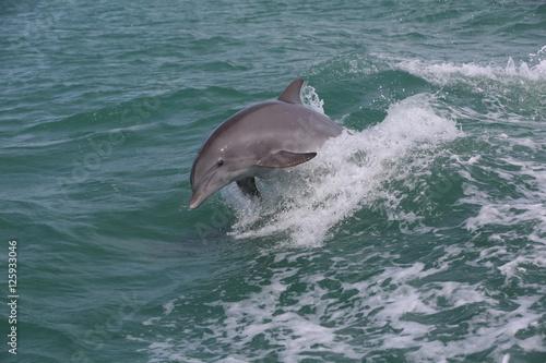 Fotografie, Obraz  Dolphin jumping waves