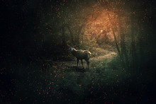 Majestic Deer With Blue Glowing Eyes And Long Horns Guard The Dark Forest With A Lot Of Fireflies And Sparkles. Mystic Wild Scene Screen Saver.