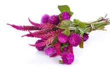 Globe Amaranth Beauty Flower I...