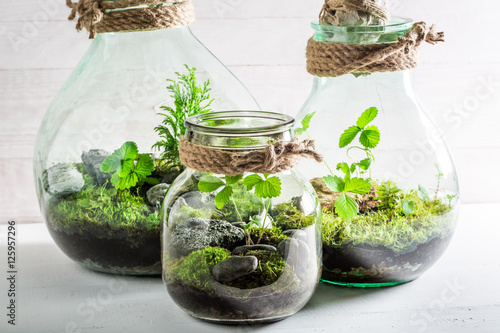 Fényképezés  Small jar with live forest, save the earth concept