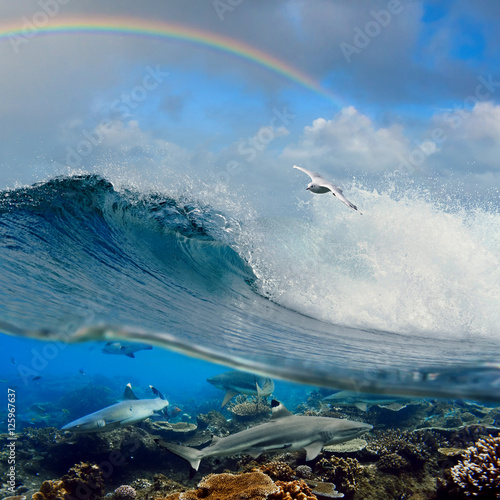 fajne-fale-surfingowe-seagull-powyzej-i-rekiny-rafowe-pod-woda