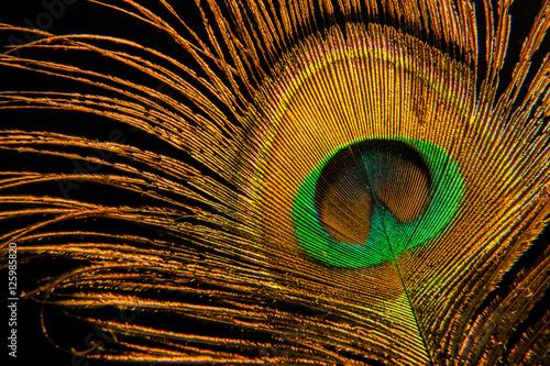 Fototapeta premium peacock feather