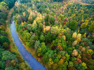Panel Szklany Współczesny autumn forest