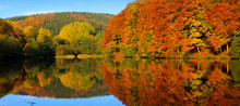 Autumnal Trees Reflection In T...