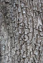 Rough Bark Texture