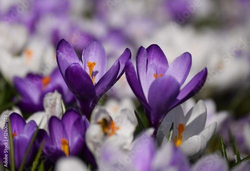 Fotografie, Tablou  Blumen