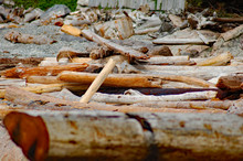 Washed Up Logs And Driftwood O...