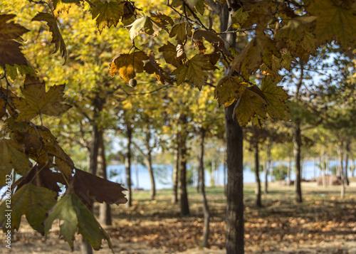 Foto op Canvas Herfst autumn scenes