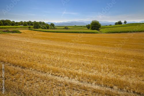 Fotobehang Weide, Moeras Abgeerntetes Getreide-Feld