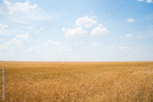 Photo Stands Night blue Gold wheat field