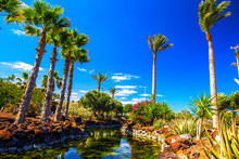 Tropical Island Resort Garden With Palm Trees On Fuerteventura, Canary Islands, Spain, Europe