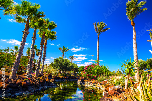 Tuinposter Canarische Eilanden Tropical island resort garden with palm trees on Fuerteventura, Canary Islands, Spain, Europe