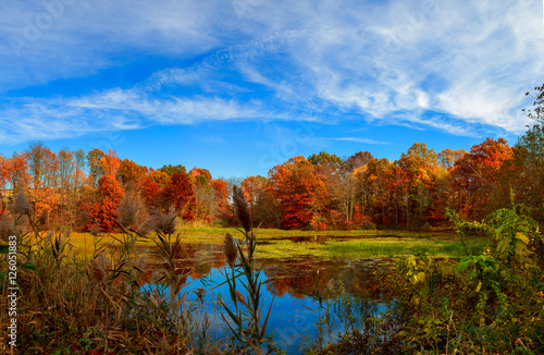 Fotografie, Obraz  Pond in autumn, yellow leaves, reflection