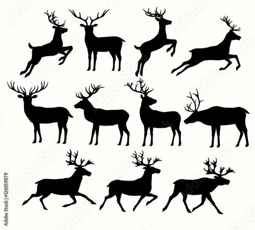Fotografie, Obraz Silhouettes of Deers