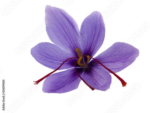 Cadres-photo bureau Fleuriste Fleur de safran