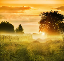 Fototapetadirt road among meadows and trees in the morning mist. Beautiful soft morning landscape. warm soft gentle morning sun with sparkling dew. soft focus.