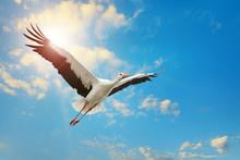 White Stork Flying In Sky On Background Of The Sun.