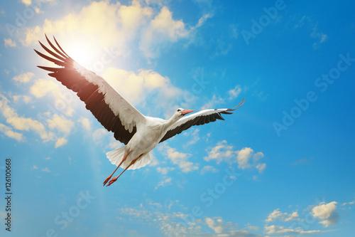 Naklejki Bocian  white-stork-flying-in-sky-on-background-of-the-sun