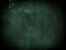 Spooky Forest With Path