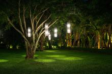 Tree With Lamp Lighting