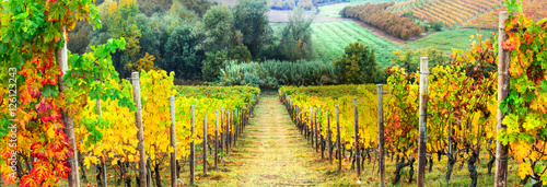 Wall Murals Vineyard Golden rows of vineyards. Autumn landscape. Italy