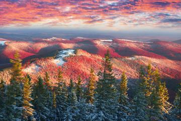 Fototapeta Gold and purple November