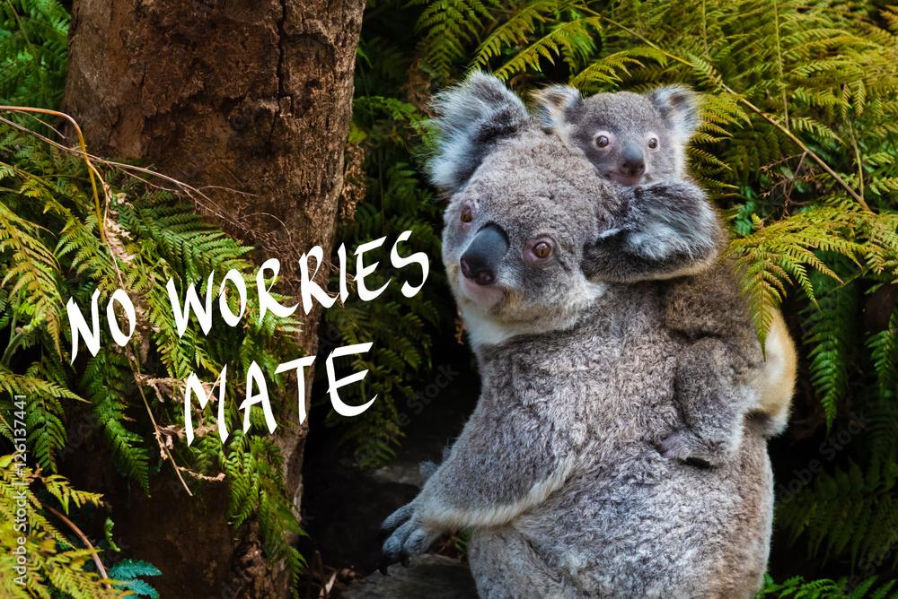 Australian koala bear native animal with baby and No Worries mate text