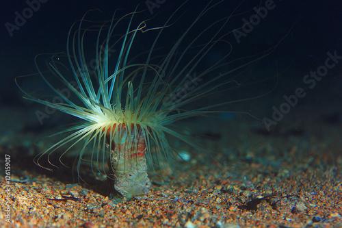 Photo actinium animal underwater photo