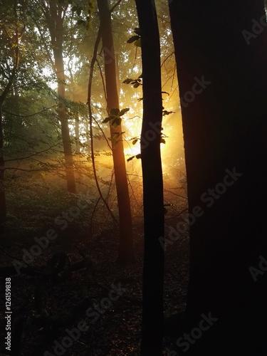 drzewa-doliny