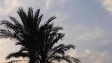 Palm Trees, Silhouettes
