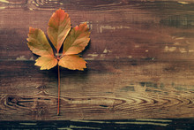 Une Feuille Morte Au Couleurs D'automne Sur Une Planche De Bois Et Aux Tonalités Vintage