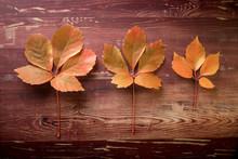 Trois Feuilles Mortes De Tailles Différentes Aux Couleurs D'automne Sur Une Planche De Bois
