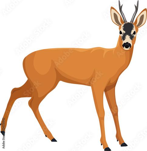 Fotomural vector Roe deer