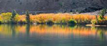 Autumn Tree Reflections Near Bishop California