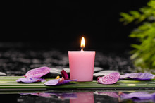 Tranquil Spa Scene- Orchid Petals With Black Stones With Candle ,green Plant