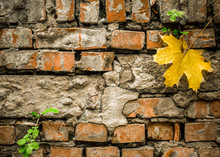 Old Bricks With A Yellow Autumn Leaf