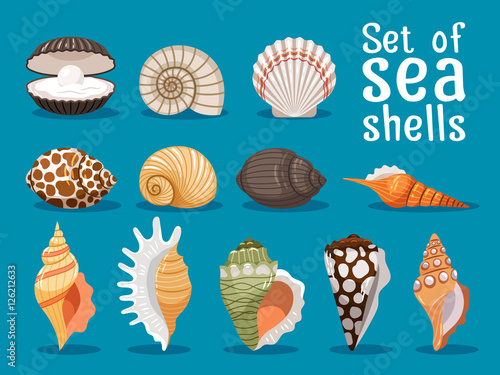 Fotografía Sea shells isolated on blue background