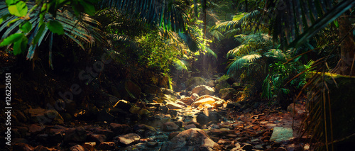 Fotomural Panorama of the mountain river in the jungle, India, Goa