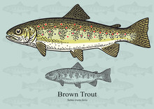 Brown Trout. Vector Illustration For Artwork In Small Sizes. Suitable For Graphic And Packaging Design, Educational Examples, Web, Etc.