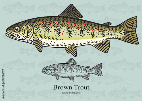 Fotografia Brown Trout