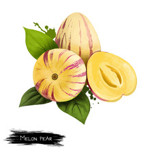 Solanum Muricatum. Pepino Dulc...