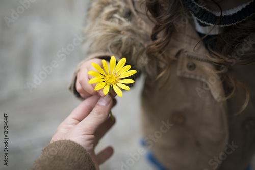 黄色い花を手渡す親子の手 Slika na platnu