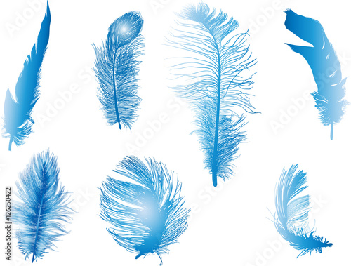 seven fluffy blue feathers isolated on white