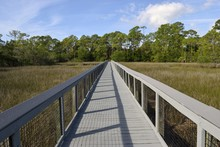 Boardwalk Over The Marshland O...