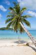 Beautiful tropical beach, palm tree and sea water in island Koh Phangan , Thailand