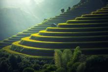 Vietnam Rice Fields On Terrace...