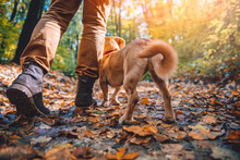 Man Hiking In Autumn Forest Wi...