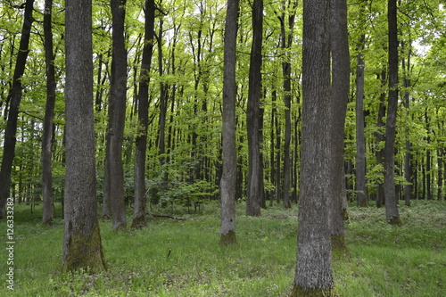 Garden Poster Forest trees