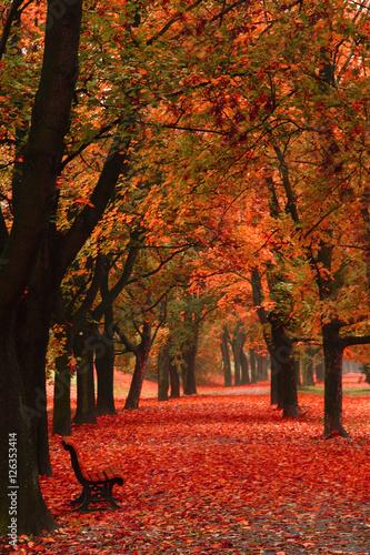 Aluminium Prints Autumn easy way in the autumn park