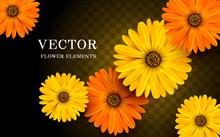 Calendula Flower Elements